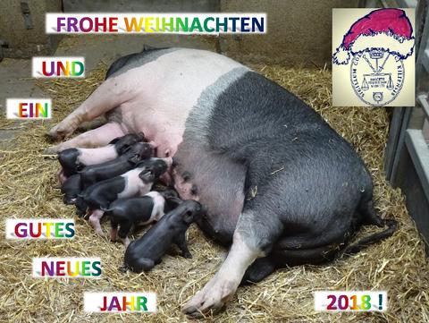 Angler Sattelschwein-Sau mit sieben Ferkeln im Tierpark Hagenbeck 2017 (Foto und Gestaltung: Regina Pritzl)